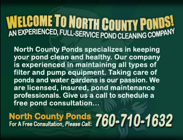 Our company north county san diego koi pond maintenance for Pond maintenance companies