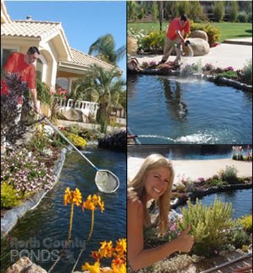 Call North County Ponds At 760 710 1632 For Questions, Pricing Info, Or To  Schedule A Free Pond Consultation.